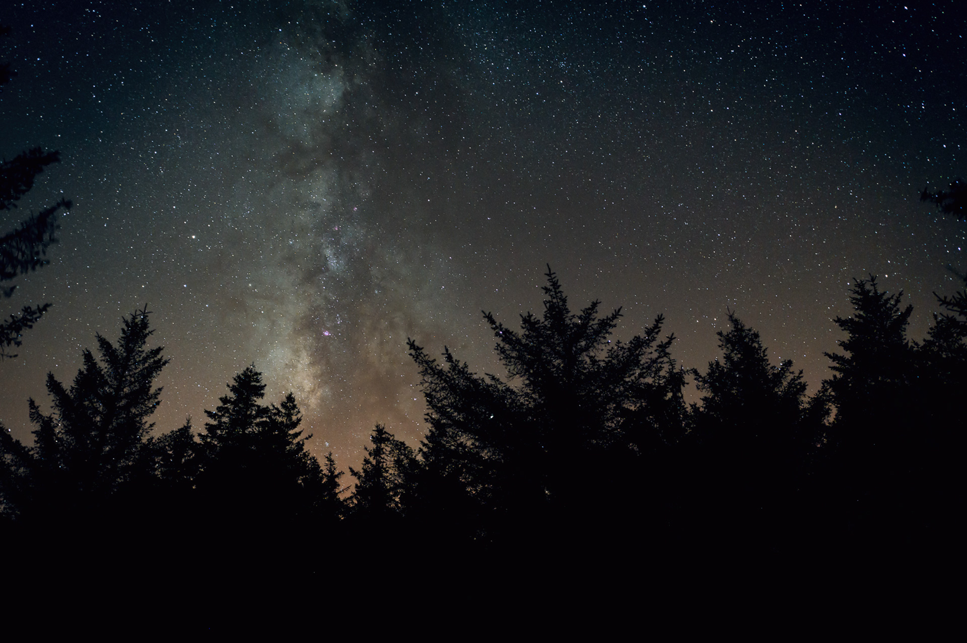 Milky Way Galaxy center over pine trees