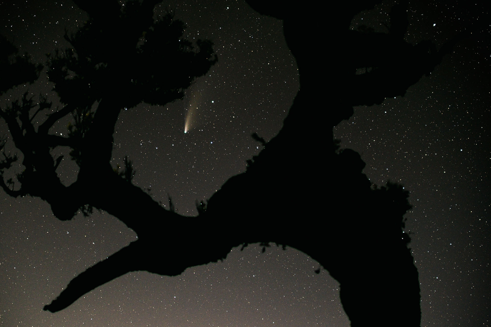 Neowise comet Madeira, Fanal